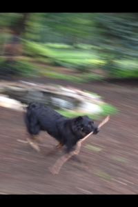 Dog-Dog-Dog in the joy of the pursuit