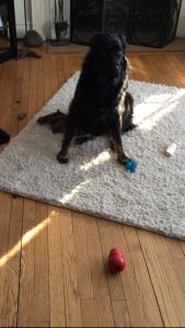 Dog-Dog and treasure