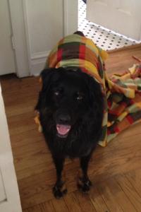 Dog-Dog with stinky blanket