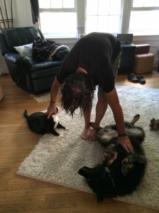 my yoga companions