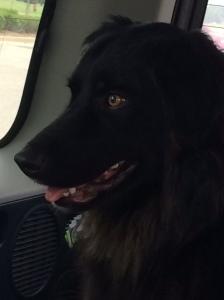 Tripper Dog-Dog-Dog on a roadtrip