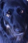 Dog-Dog now-a-days