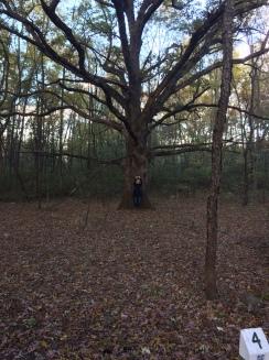 KDot Halloween Tree