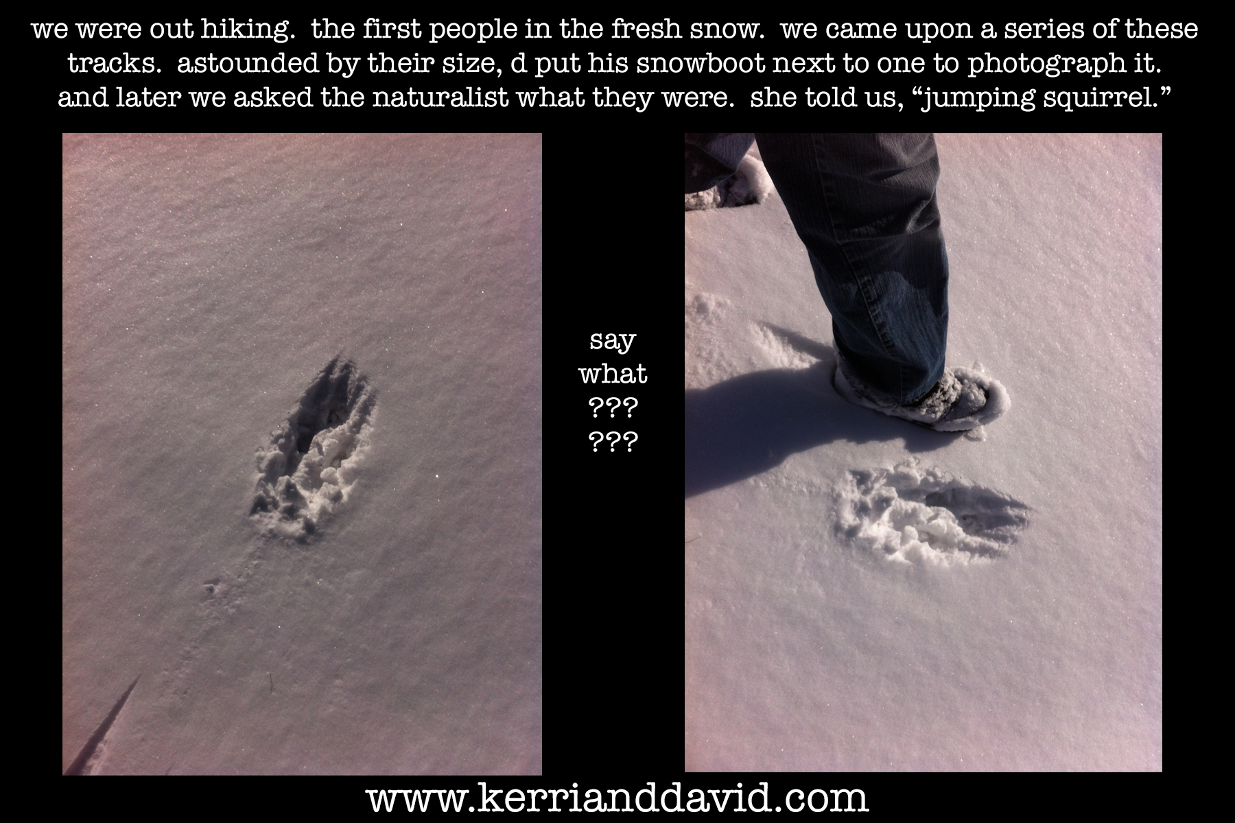 jumping squirrel tracks website box copy