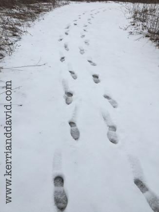 footprints in the snow at bristol woods website box copy