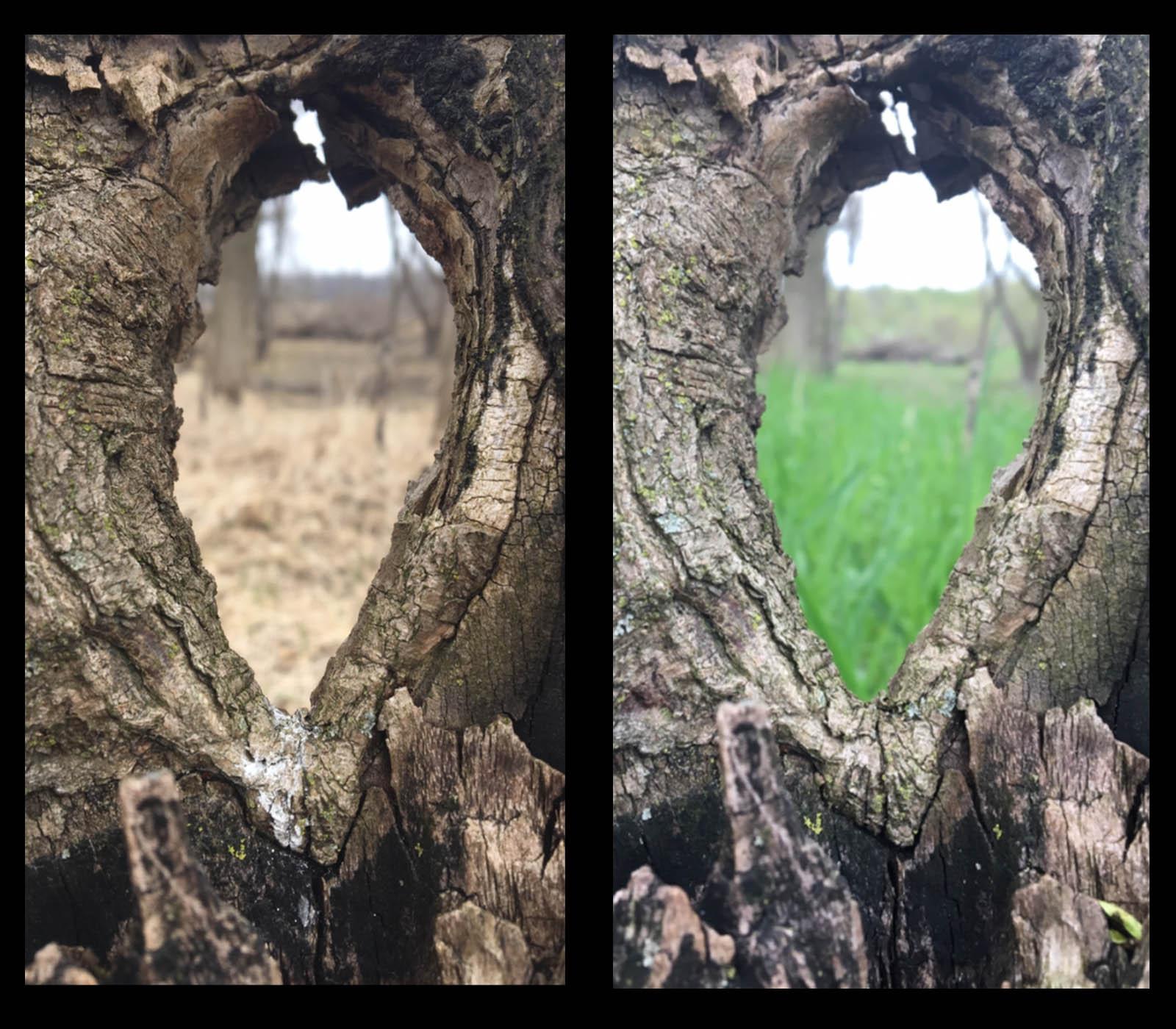 seasons through the tree copy