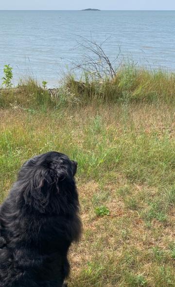 dogdog pondering copy