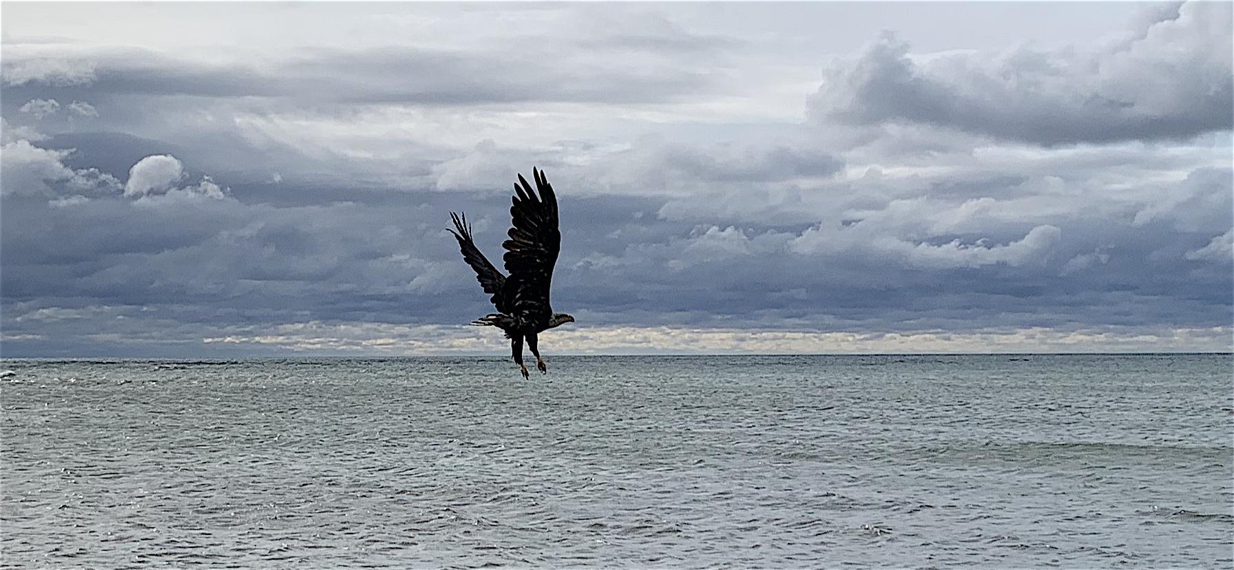 eagle copy.PNG