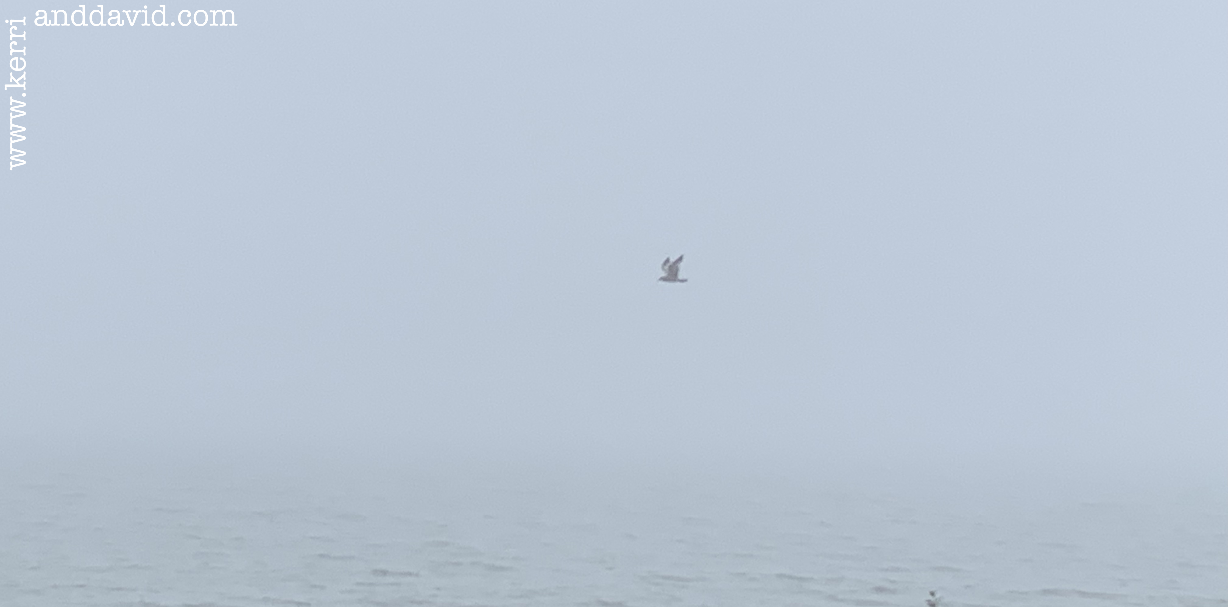 seagull in fog website box copy