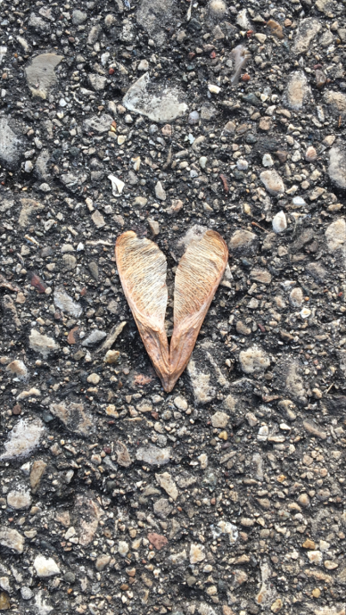 heart leaf copy
