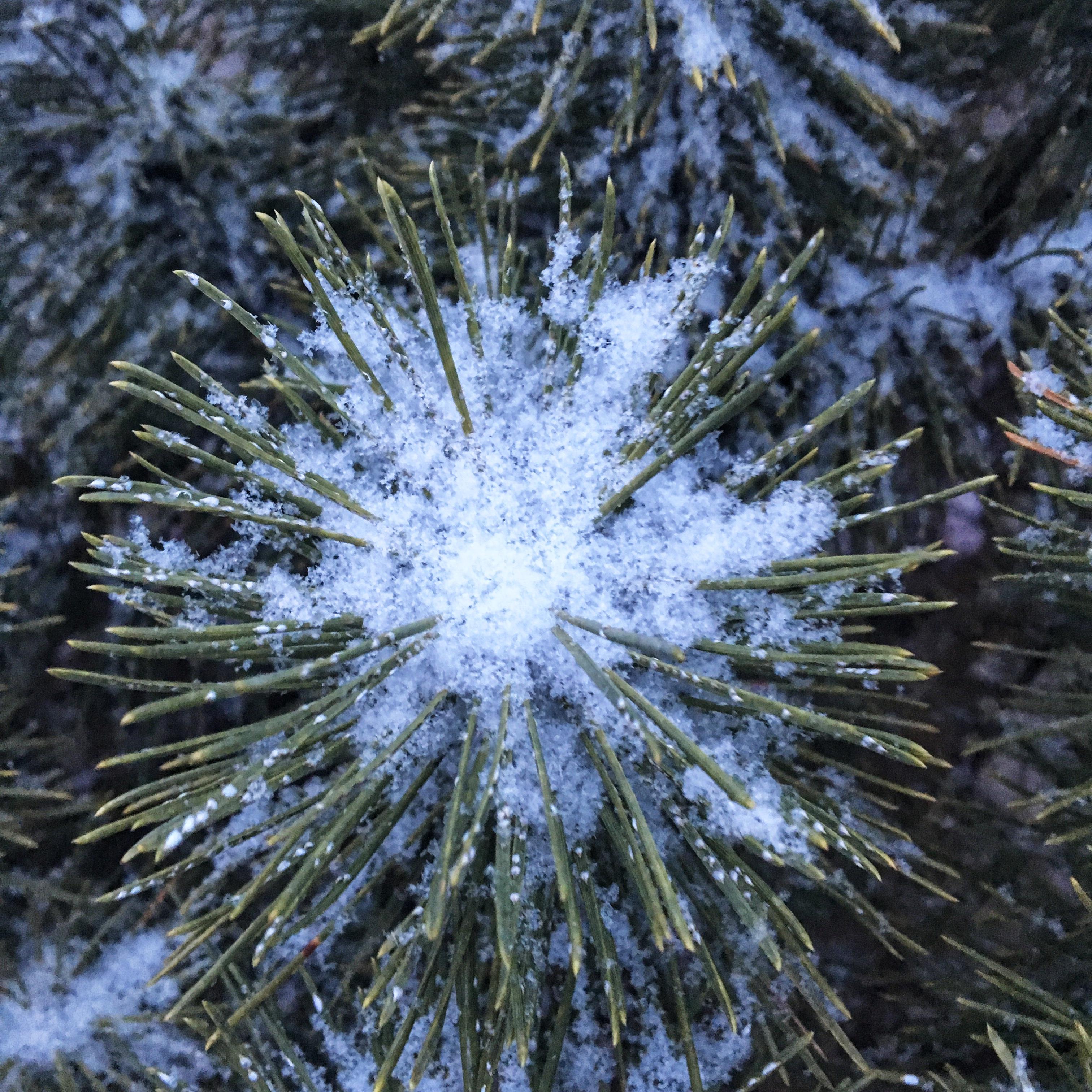 snow in evergreen copy