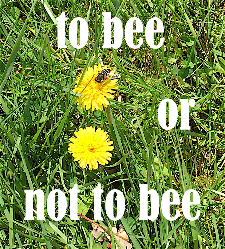 to bee or not to bee copy