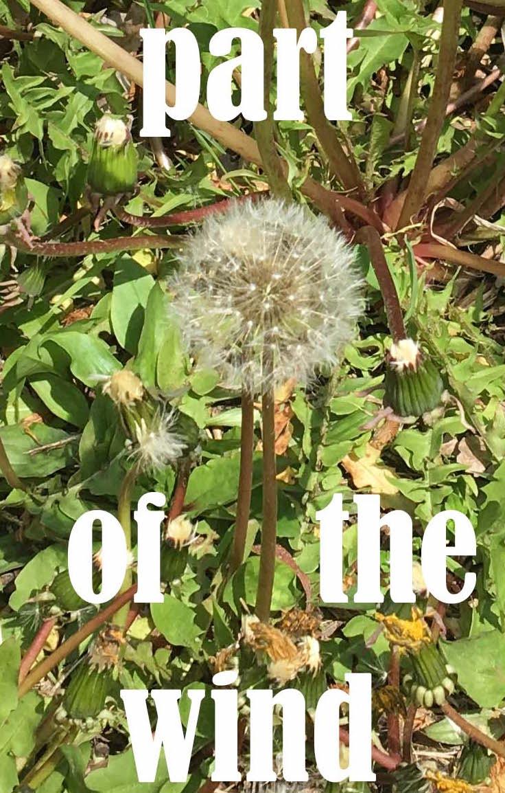 part of the wind dandelion fluff copy