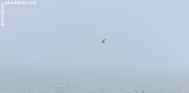 seagull in fog website box copy