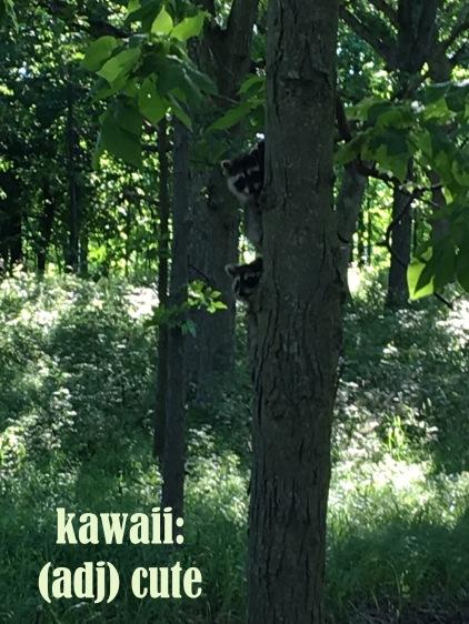 kawaii raccoons copy